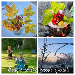 Escape to the Woods specials
